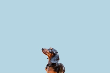 Bentley - Head of Fetch