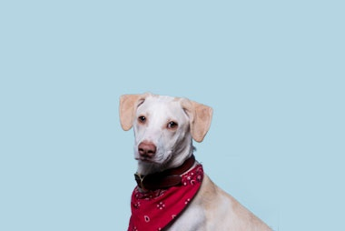Lenny - Inbound Barketing Specialist